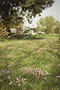 Germany, Mecklenburg-Western Pomerania, Ruegen, Blooming flowers in meadow - MJF001203