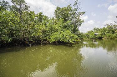 Indonesia, Riau Islands, Bintan Island, Mangrove trees - THAF000400