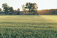 Germany, North Rhine-Westphalia, Farmhouse in Coesfeld heath - MEMF000074