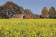 Germany, North Rhine-Westphalia, Gescher, Farm with rape field - MEMF000072