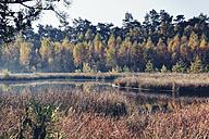 Germany, North Rhine-Westphalia,  Coesfeld heath - MEMF000031