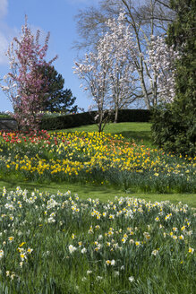 Germany, Baden-Wuerttemberg, Mainau, Blooming tulips and daffodils - WIF000705