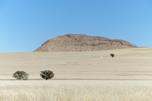 Africa, Namibia, Namib Naukluft area, grasslands with trees - HLF000582
