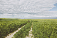 Germany, Mecklenburg-Western Pomerania, Redewisch, Baltic Sea, Grain field, Field path - MEMF000105