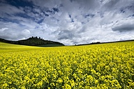 Germany, Baden-Wuerttemberg, Constance district, Hegau, Rape field, Maegdeberg in the background - ELF001042