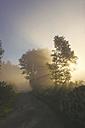 Germany, North Rhine-Westphalia, Forest track, Morning mist and sunrise - ON000586