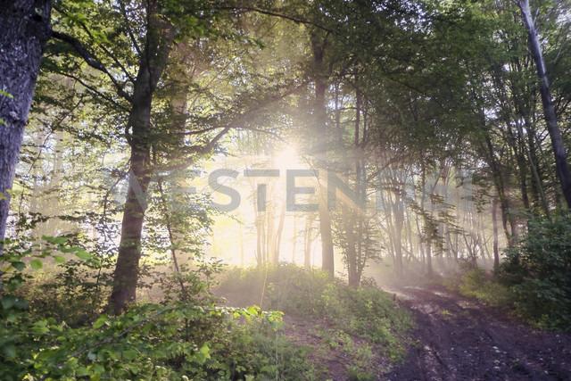 Germany, North Rhine-Westphalia, Forest, Morning mist and sunrise - ONF000561
