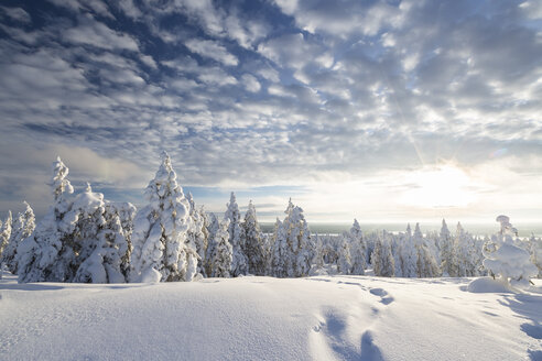 Scandinavia, Finland, Rovaniemi, Trees in wintertime, Footmarks, Against the sun - SR000546