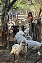 Argentina, Gran Chaco, Salta, Zapota, Indian girl of Wichi people herding goats - FLK000301
