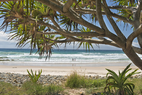 Australia, New South Wales, Byron Bay, Broken Head nature reserve, cabbage tree and view to the beach - SHF001334