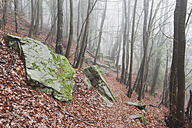Germany, Rhineland-Palatinate, Burrweiler, Palatinate Forest, Hiking path - GWF002879