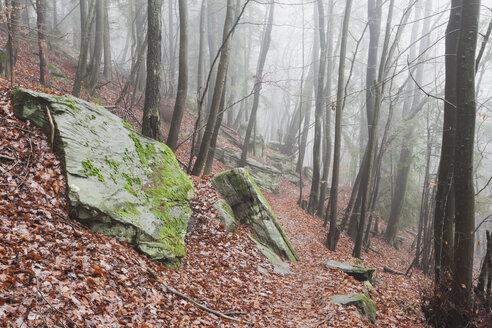 Germany, Rhineland-Palatinate, Burrweiler, Palatinate Forest, Hiking path - GWF002879