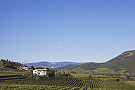 Italy, South Tyrol, Wine route, Kaltern, St. Josef am See, Vineyards - GW002889