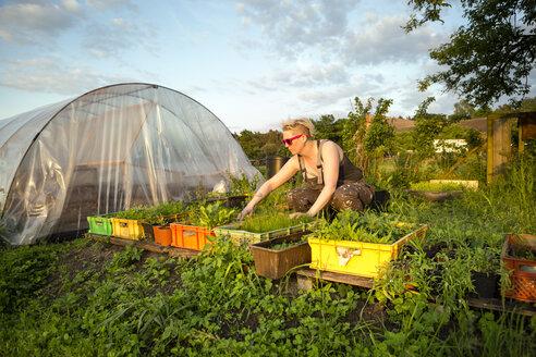 Germany, Brandenburg, Bienenwerder, portrait of female farmer working in vegetable garden - FX000010