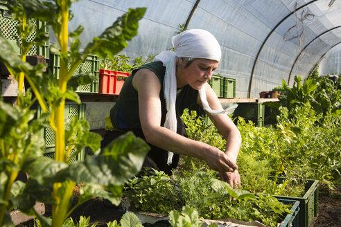 Germany, Brandenburg, Bienenwerder, portrait of working female farmer in greenhouse - FX000009