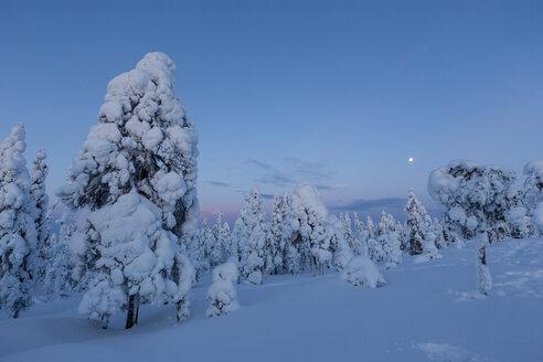 Finland, Rovaniemi, Winter forest at blue hour - SR000547