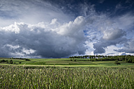 Germany, Baden-Wuerttemberg, Constance district, barkley field at Hegau by storm - ELF001050