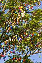 Germany, Baden-Wuerttemberg, Ludwigsburg, Dekorated tree with easter eggs - WDF002499