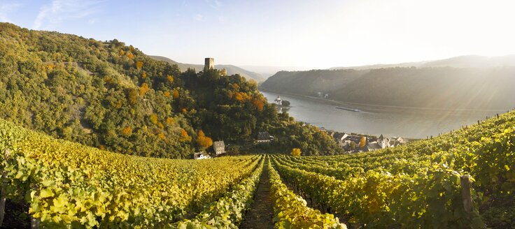 Germany, Rhineland-Palatinate, Kaub, Gutenfels Castle with vineyards in the foreground - AMF002317