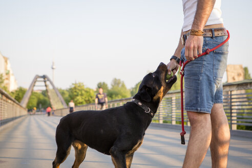 Germany, Berlin, portrait of young man playing with his Rottweiler on pedestrian bridge, partial view - FX000014