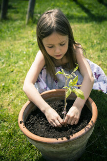 Little girl planting tomato plant - SARF000694