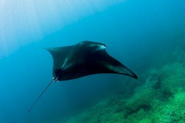 Oceania, Micronesia, Yap, Reef manta ray, Manta alfredi - FGF000069