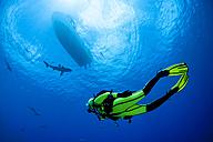 Oceania, Micronesia, Yap, Diver with grey reef sharks, Carcharhinus amblyrhynchos - FGF000070