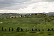 Italy, Tuscany, Landscape near Siena - MYF000387