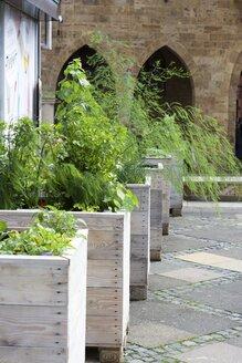 Germany, North Rhine-Westphalia, Minden, Mixed vegetables in a raised bed - HAWF000294