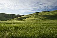 Italy, Tuscany, Crete Senesi, Landscape - MYF000437