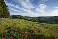 Italy, Tuscany, Crete Senesi, Landscape - MYF000442