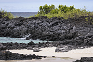 Oceania, Galapagos Islands, Santa Cruz, view to rocky coast at Playa Las Bachas - CB000314