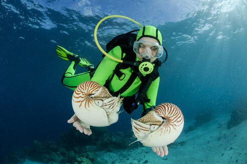 Oceania, Palau, Diver watching Palau nautilusses, Nautilus belauensis, in Pacific Ocean - FGF000047