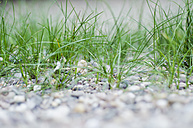 Sea weed at the banks of Rhine River - CZF000154