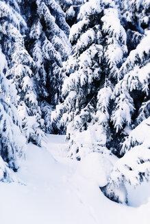 Germany, Lower Saxony, winter landscape in Harz - MEM000243