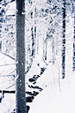 Germany, Lower Saxony, winter landscape in Harz - MEM000244