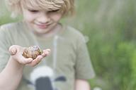 Germany, Saxony, Edible snail on hand of a boy - MJF001291