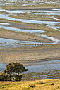 New Zealand, Golden Bay, Puponga, patterns in the sand at low tide - SHF001435
