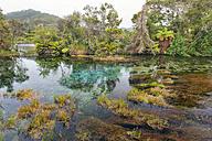 New Zealand, Tasman, Takaka, Te Waikoropupu Springs with vegetation around the freshwater pool - SHF001438