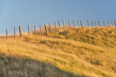 New Zealand, Golden Bay, Wharariki Beach, old fence on an overgrown sand dune - SHF001467