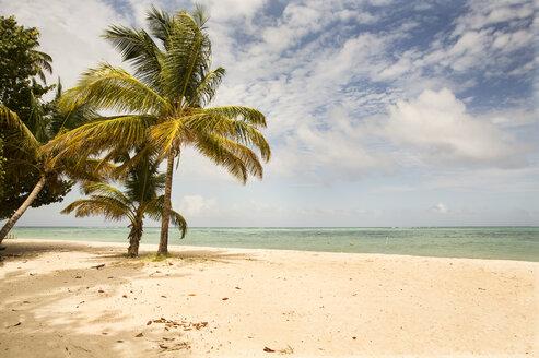 Caribbean, Trinidad and Tobago, Tobago, Pigeon Point - SKF001585
