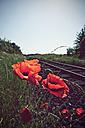 Germany, North Rhine-Westphalia, Corn Poppies, Papaver rhoeas near rail track - HOH000888