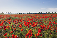 Germany, Cologne Widdersdorf, poppy field - GWF003558