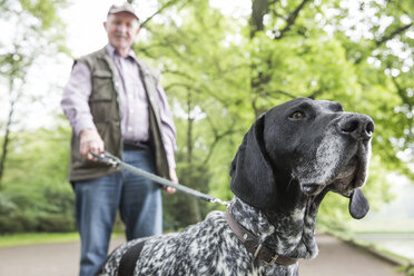 Senior man walking with his German Shorthaired Pointer in city park - JATF000741