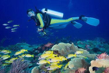 Oceania, Palau, Diver watching schoal of bluestripe snappers - JWAF000131