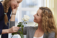 Daughter presenting her mother a white rose blossom - STKF001057