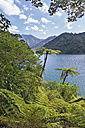 New Zealand, South Island, Marlborough Sounds, Tennyson Inlet, fern trees in Duncan Bay - SHF001544
