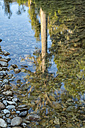 New Zealand, South Island, Marlborough Sounds, Tennyson Inlet, mirror image of a Kahikatea tree in water - SHF001550