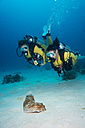 Palau, Pacific Ocean, two scuba divers looking at sea cucumber Thelenota anax - JWAF000157
