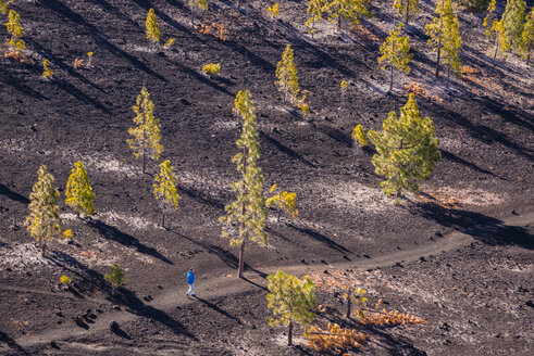 Spain, Canary Islands, Tenerife, Mirador de Chio, Canary Island Pines, Pinus canariensis, Hiker - WGF000380